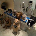 Cães distinguem palavras e entonações com mesma região do cérebro humano https://t.co/mhhi6DzfxS #G1 https://t.co/91UnWzg09B