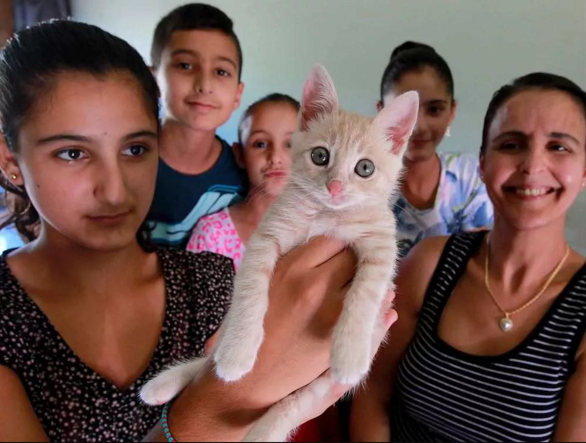 RT @TheWindsorStar: Think you love cats? YQG family saves cat in Lebanon and gets him home thanks to @AirCanada ht…