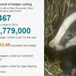 It costs taxpayers a whopping £1,212.68 for each badger needlessly murdered #StopTheCull https://t.co/zIY7Euce4a https://t.co/J53d13ZZb6
