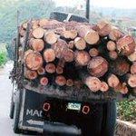 #PararLaDeforestacion Dramática y responsable decisión la del Presidente, que no responde a ninguna arbitrariedad. https://t.co/Uu0Y3zNh09