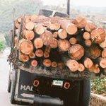 A partir de ahora, el que se meta a deforestar irá preso, expresó el presidente Medina. #PararLaDeforestacion https://t.co/cU1DUO8IyT