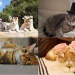 「ねこ休み美術館」東京・大阪・札幌で開催 - スター猫が名画とコラボ、「ねこ休み展」参加作家が勢揃い - https://t.co/UrflAc64T4 https://t.co/cU99ehoI0C