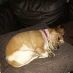 My little dog is tired after her trip to #Filey https://t.co/htkSoTQSzw