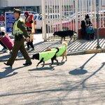 Carabineros de Quilpué adopta perros callejeros y los incluye en sus rondas!  vía @bombicum https://t.co/7Z3mteVROZ