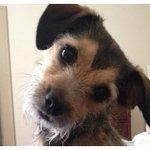 #ETC Los perros comprenden lo que decimos y cómo lo decimos https://t.co/qWbeoU9lOt https://t.co/DQMFB23ghl