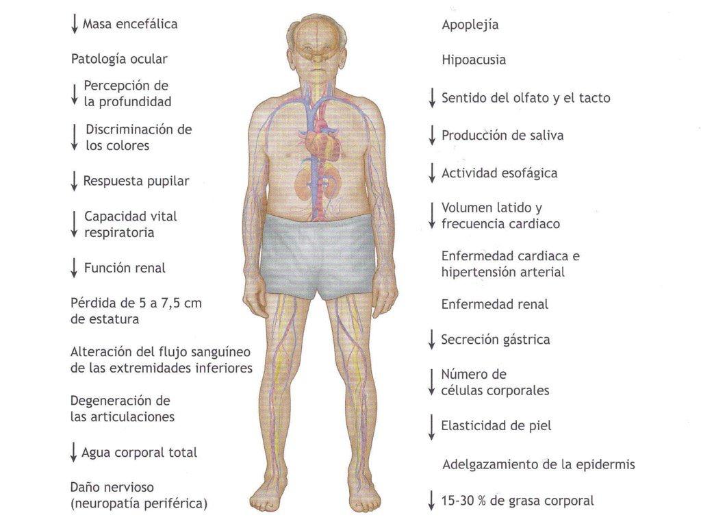 tuitsmedicos: efectos del envejecimiento en órganos y sistemas ...