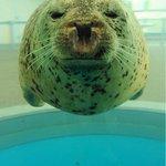 500RT:【丸すぎる】京都水族館が投稿したアザラシの写真が話題 https://t.co/nv3jHjkqK0 アザラシなので丸みはあれど、実際にまんまるなわけではない。ということはこのショットは、奇跡の1枚と呼べるのではない… https://t.co/onMv51Lub1