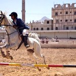 استهدف العدوان السعودي اليوم اسطبل الخيول في الكليه الحربية وتعتبر من أرقى الخيول العربية الأصيلة ولها بطولات عالميه https://t.co/e2wdY5n96M