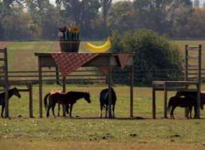 Boer krijgt geen toestemming voor afdak paarden, vindt meesterlijke oplossing https://t.co/WAsHmZRNFv https://t.co/tmnncBNSAC