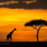 African Dream by mariomoreno #photo https://t.co/ak45ew4m3p
