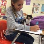 je serais peut-être un peu plus motivé à reprendre les cours si il y avait des chats dans les écoles https://t.co/V5YNlIKnV8