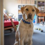 #ICYMI: Dogs can in fact understand what you are saying, new research finds @ELTEEK https://t.co/lPtfv3W4HZ https://t.co/BD9Ofv1J7d