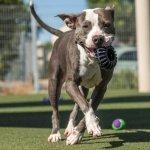 Im adoptable #dog #Buddah_CCSTCA_04 Call Now Wed Aug31 925-335-8330 #ContraCosta CA https://t.co/EELJLZFtVB https://t.co/9sB9VbqB3E