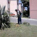 Trabajos de chapoleo y limpieza en Blvd. Loma Real #Tampico https://t.co/RExwFbhTAh