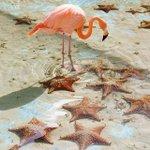...still no flamingo emoji. 😒 https://t.co/2QF5xjoc3X