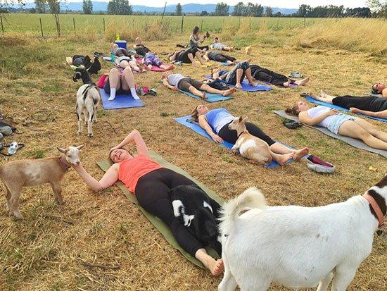 Goat yoga. https://t.co/qVzQWI6Iz1