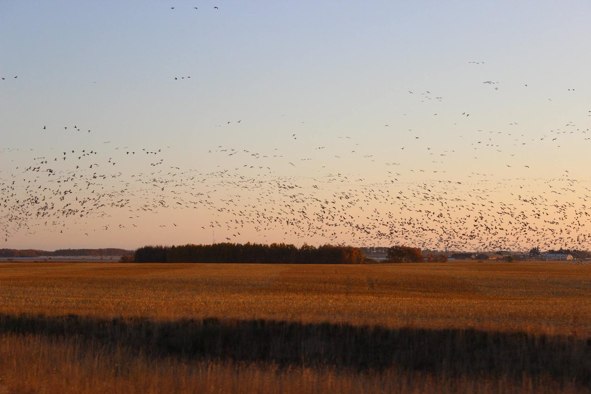 """""""Wheat kings and pretty things, let's just see what the morning brings...""""  #GordDowniesCanada https://t.co/PcNoJQZFfa"""
