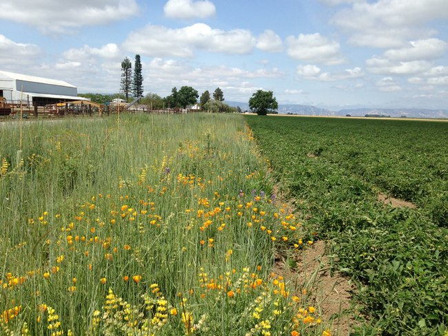 Wildflower strips on farms are worth the cost, research says. https://t.co/hV0GfyYCWw https://t.co/5EFdfRrIkh