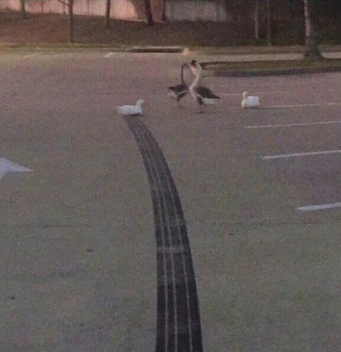 How fast was this duck going? https://t.co/ddjBc0VnHZ
