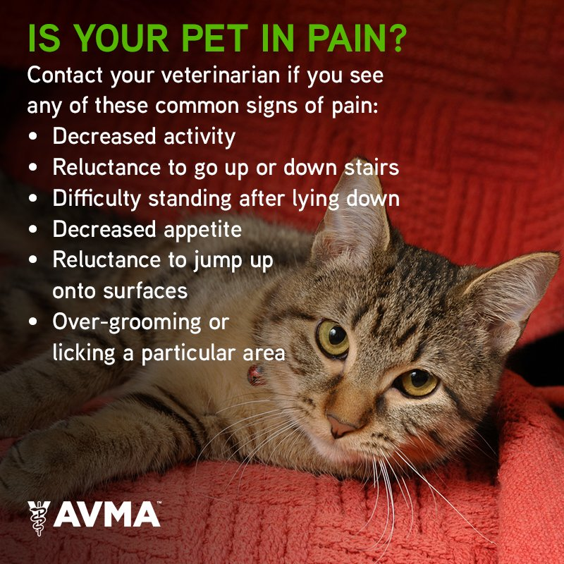 Pain in animals may not be easy to identify, but it's crucial to report signs of pain to a veterinarian ASAP. https://t.co/nsi5ok6w6j