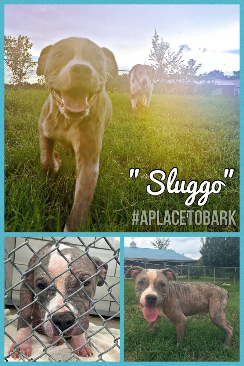 """""""Sluggo"""" is SoOoo Happy his hair is growing back & that he has a second chance at LIFE"""