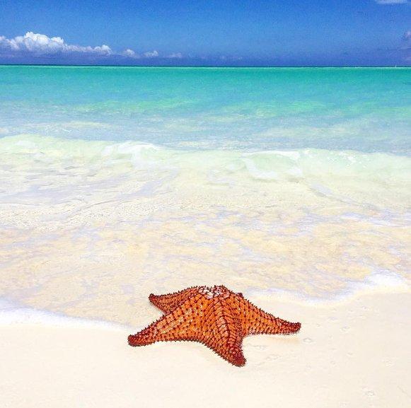 'RT' if you wish you were here. #BeachesTurksAndCaicos