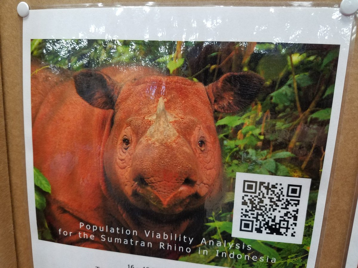 Sumatran #rhinos at the #IUCNCongress. Who could hurt that pretty face? https://t.co/UyfaYn2LRD
