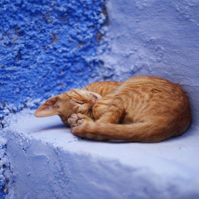 P6 Soyons troll mais pas trop avec ce chaton endormi à Chefchaouen, Maroc #teamtroll #Battlephoto https://t.co/HUSlemTDxu