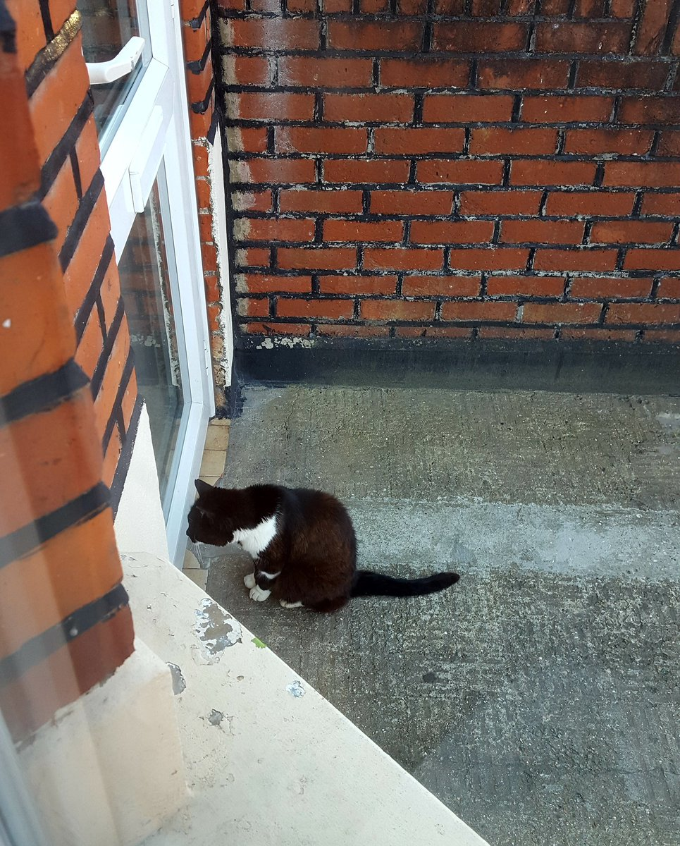@thecatreviewer cat been waiting outside our house for half hour. High level of determination & zero fear. 10/10 https://t.co/ARmvmUGkdg