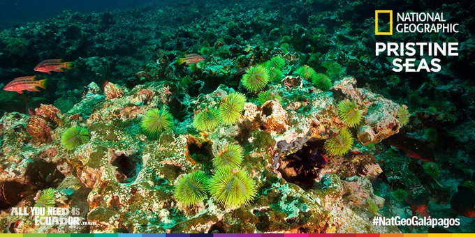 El mundo conmemoró el compromiso de Ecuador con la conservación del planeta. #NatGeoGalápagos #PristineSeas