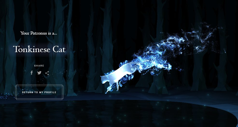 Our #patronus is a tonkinese cat! what's your patronus ... Lady Gaga Meaning