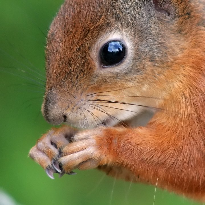 squirrel close-up https://t.co/BNKWk27oUP