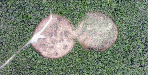 森を切り裂く二つの円 ヘリ着陸帯予定地で大規模伐採 北部訓練場 https://t.co/iDBLG25EPk https://t.co/nBXYBVhnK9