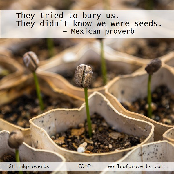 Mexican proverb —       They tried to bury us. They didn't know we were seeds . . .  ѾФР | #Mexico #quotes https://t.co/XrdtnXWuWC