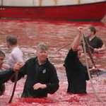 .@HayesCreech People love Soccer but not whale & dolphin slaughter (Faroese Grind) #WorldCup2018 https://t.co/27xeDLu9BN