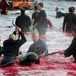 Game on: Jun-9-17 Faroes (FRO) vs Switzerland -> Soccer=Sport=Fairness -> Killing Whales surely NOT! #WorldCup2018 https://t.co/z71Kj9oDex