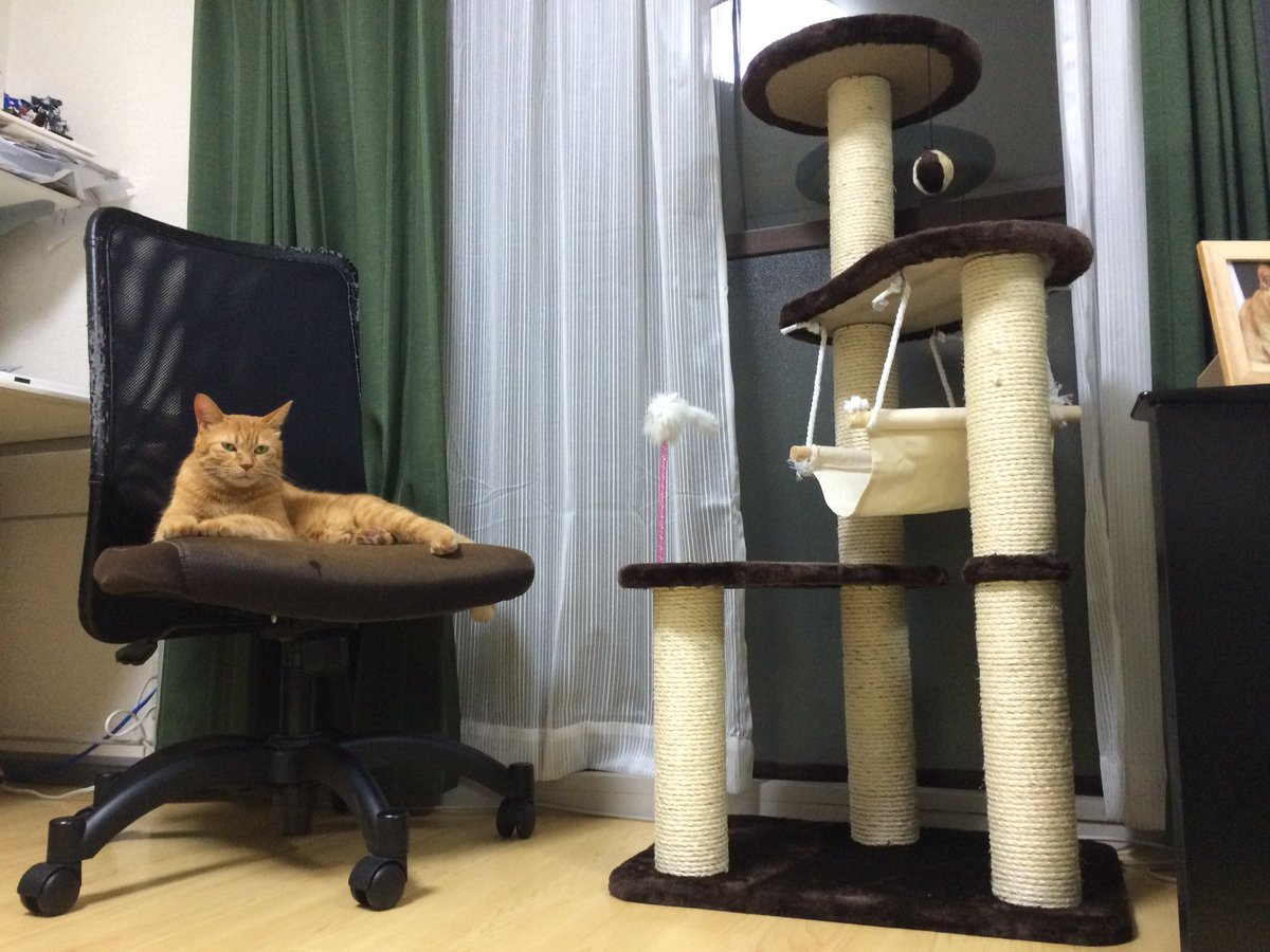 キャットタワーを買って猫が遊んでくれる事を期待した結果 https://t.co/42QOTz0sLY