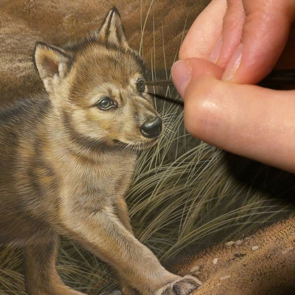 Wolf puppy in progress, watercolor on board, ©Rebecca Latham  #wildlife #watercolor #art #… https://t.co/lLdi0xrQRq https://t.co/5oR3iNlXXz