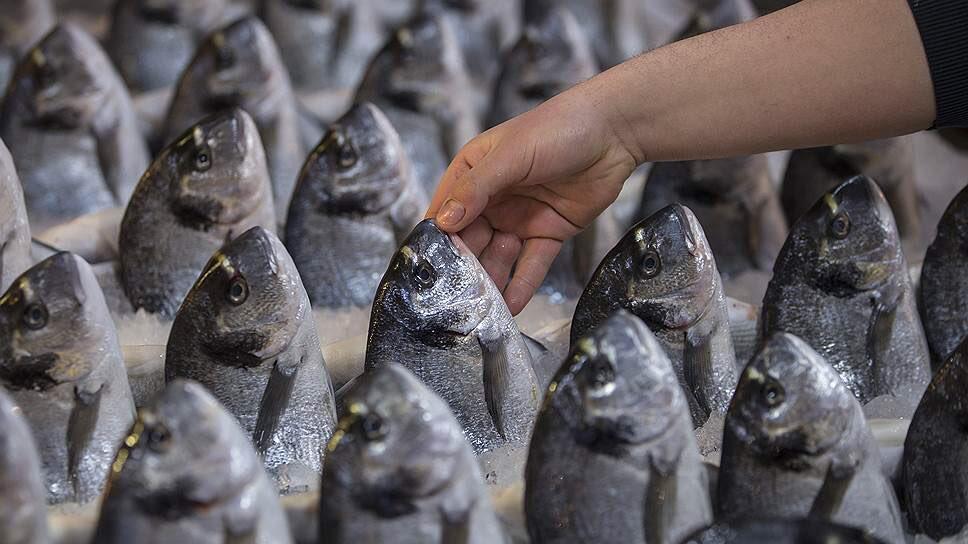 Виды морских рыб и названия