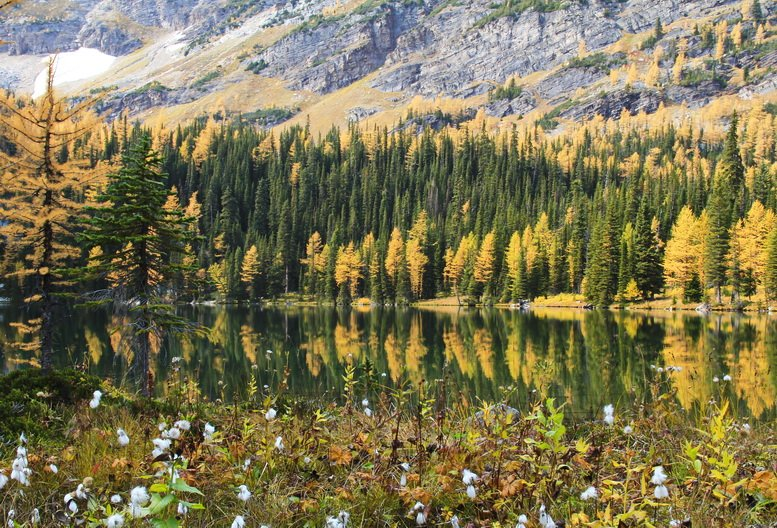NEW: A complete guide to the best places for larch viewing in #Alberta https://t.co/EqekTuAsOv @TravelAlberta https://t.co/irjTIiygv4