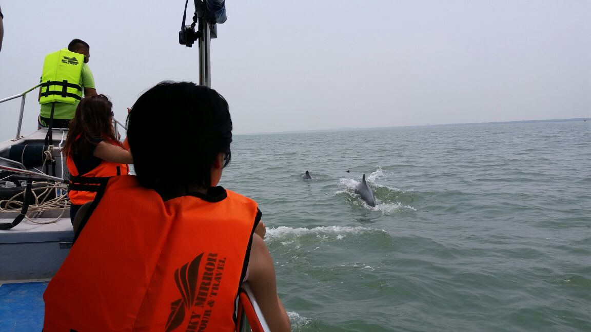 Did you know that you can watch dolphins during the Sky Mirror trip at Sasaran, Jeram, Kuala Selangor :) https://t.co/ribk8jFjwk