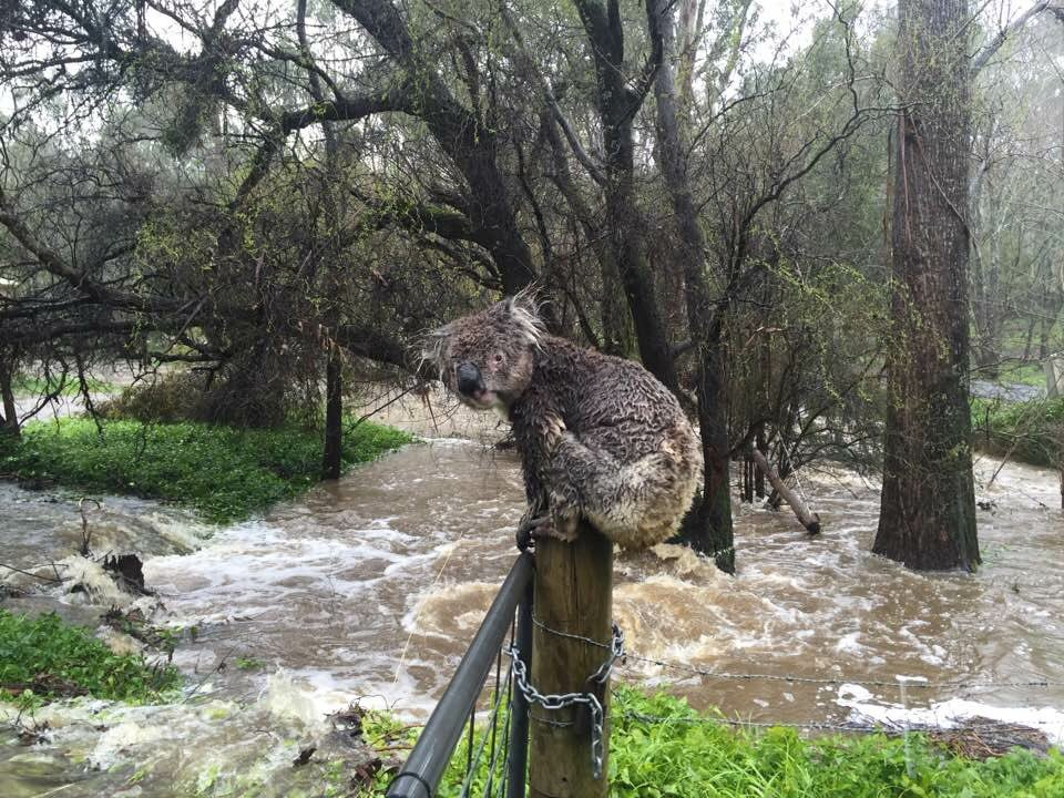 On air now: Russell Latter who captured this shot of the #Adelaide floods which has gone global. https://t.co/UyLIATUOre