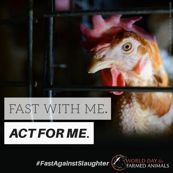 Raise awareness on the plight of farmed animals! #FastAgainstSlaughter October 2: https://t.co/xIuONyZzLE https://t.co/ICyNvurjsr