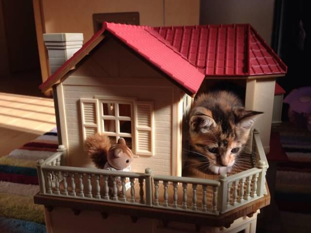 シルバニアの仲間に危機! https://t.co/MGyrwACC2x #cat #猫 #写真 #くろなつ https://t.co/uoyHJwVhgR