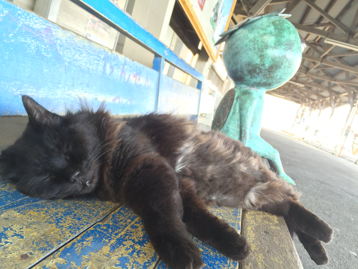 「beatmania IIDX」で『駅猫のワルツ』がリリースされました☆ 湊線の駅猫おさむとミニさむの映像が流れますのでぜひプレイしてみてください♪♪  https://t.co/hR4MDrCbkJ https://t.co/P7UsvQTHKC