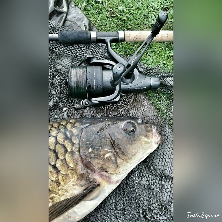 Carps.... #<b>Soniksports</b> #carpfishing #carpy #carp #fishing #stalking #fishingtackle #fun #love