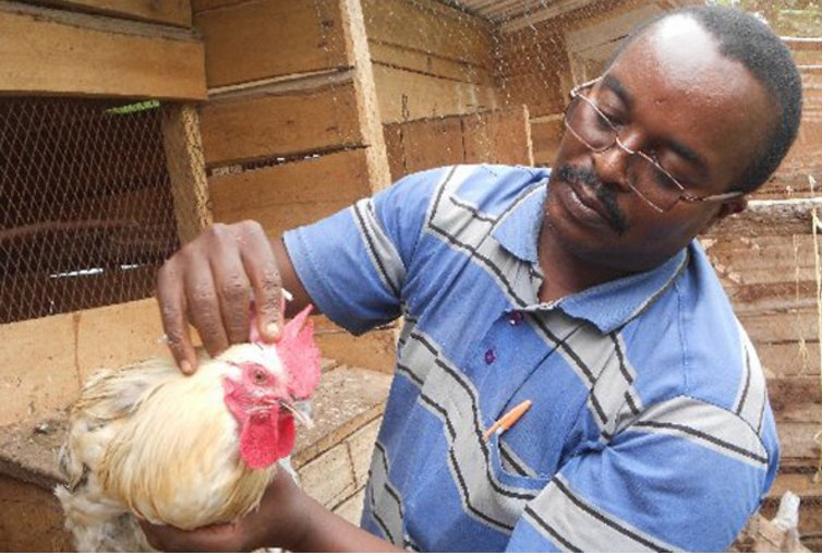 Diary of a Poultry Farmer: Two diseases that will give you trouble