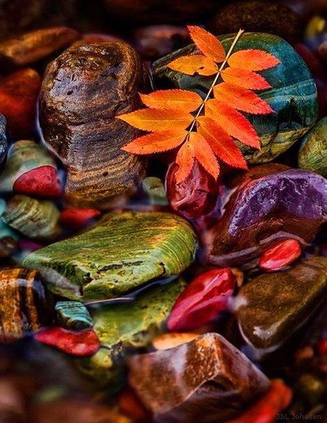 Autumn Pics & Foods - C Madlin  cover image