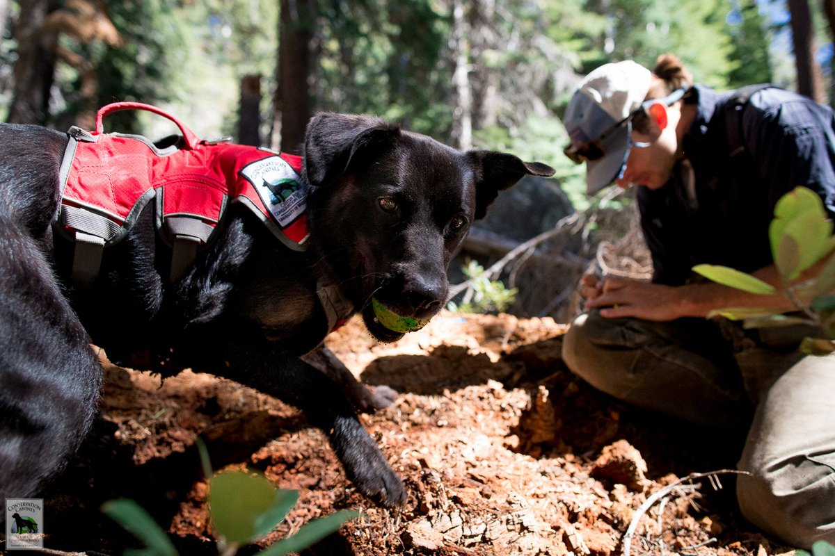 Help death-row shelter dogs become wildlife conservation superheroes: https://t.co/Fe8WIy7lv1  https://t.co/1o6ZpU5zoG