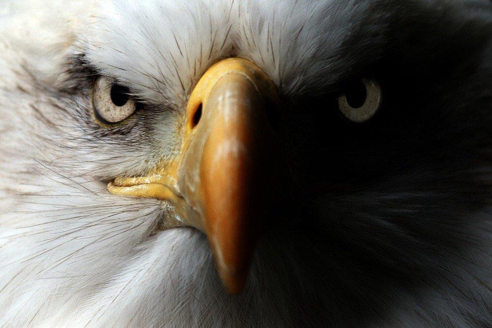 #BirdGang https://t.co/o7hQOVJaez